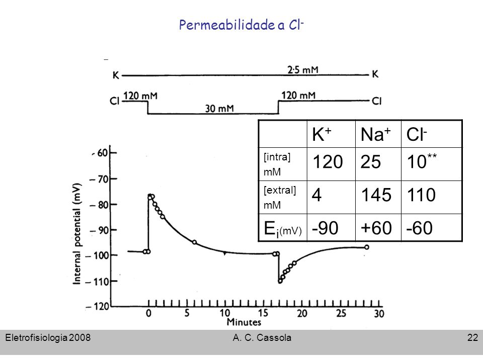 Permeabilidade a Cl-K+ Na+ Cl- [intra] mM. 120. 25. 10** [extral] 4. 145. 110. Ei(mV) -90. +60. -60.